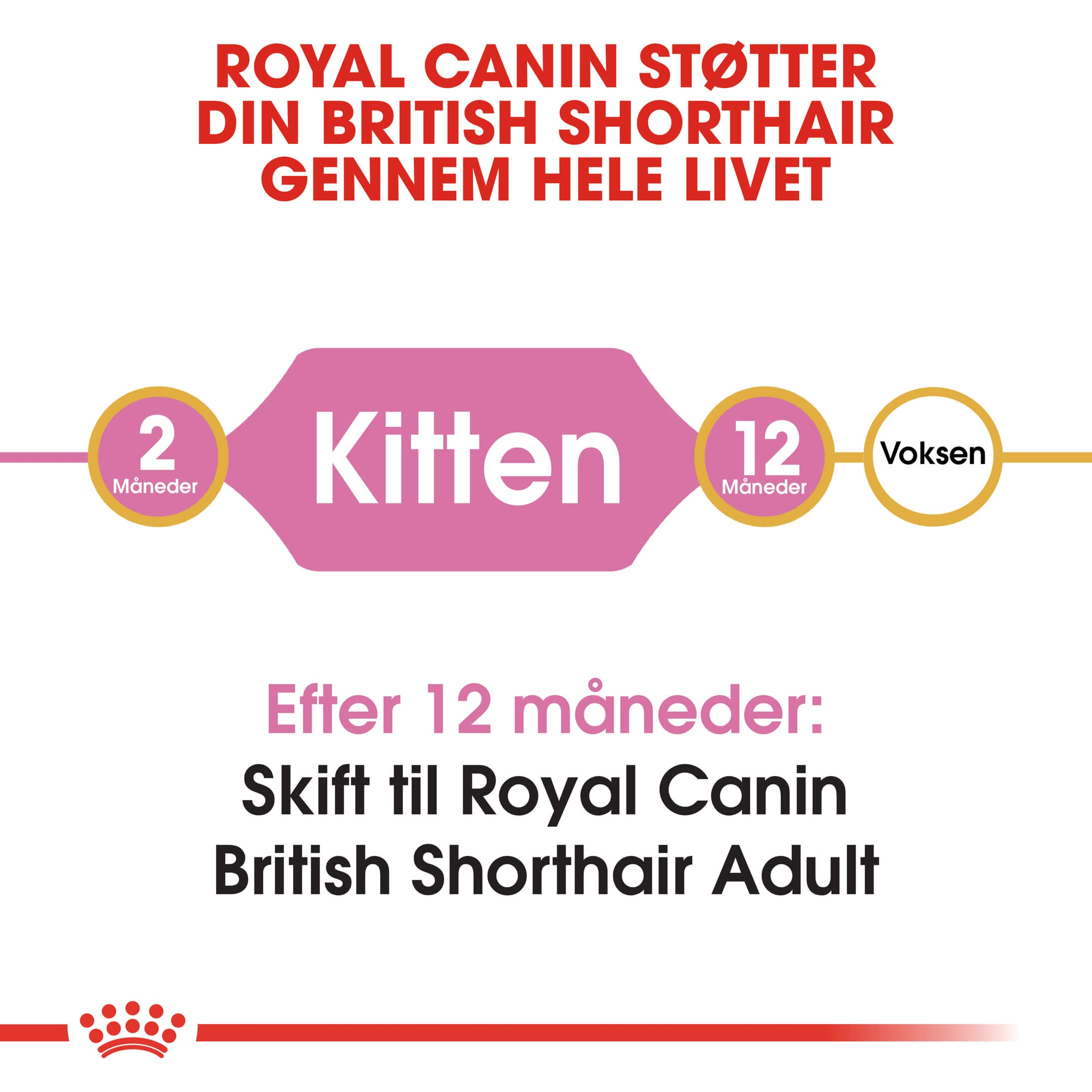Royal Canin British Shorthair Kitten kattefoder