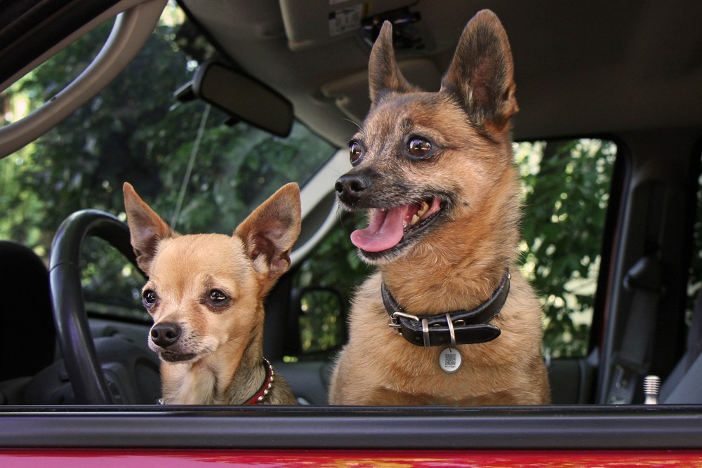 Spotted! ID Tag voor hond & kat - small