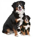Hundefoder efter livsfase