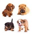 Racebestemt hundefoder